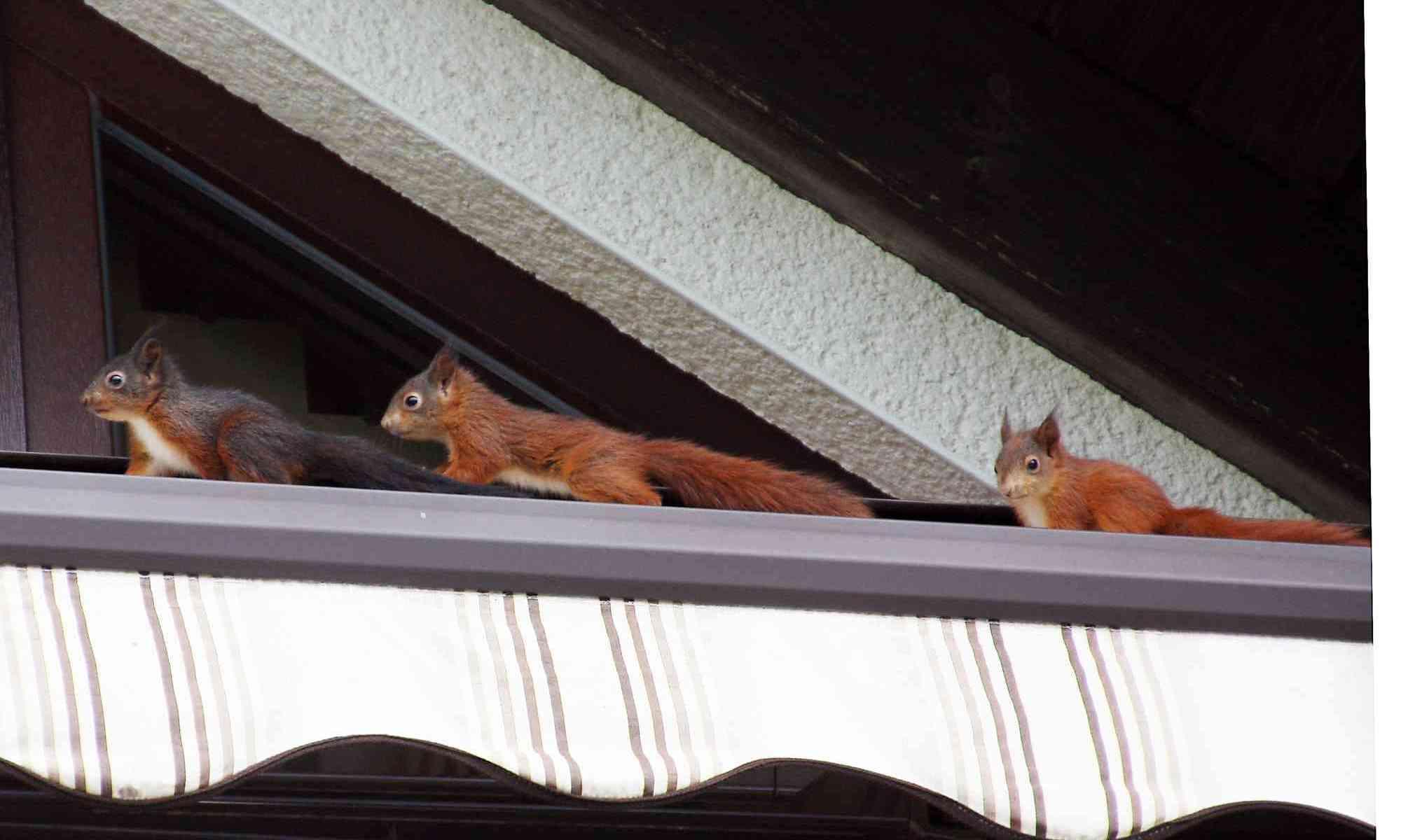 ferienwohnung worbs meinerzhagen eichhörnchen